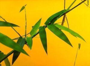 【エコ】竹は1日に1メートル成長する?実はサスティナブルな【竹製品】