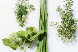 簡単な有機【家庭菜園】おすすめはハーブ!エコをかなえる3つのポイントも紹介